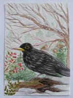 Blackbird in snow by Pikabulbachu