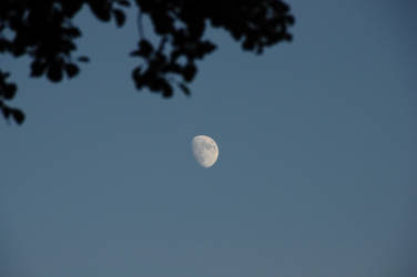 The Moon by Kurai-no-Manazashi