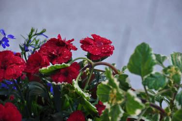 Red Flowers by Kurai-no-Manazashi