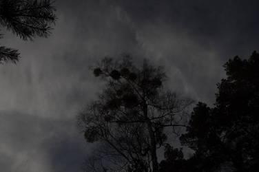 Dark Trees 3 by Kurai-no-Manazashi