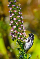 Spring Time Bloom by cobaltsennheiser