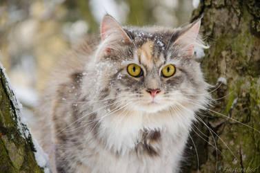 Mimi loves snow by Finsternisss