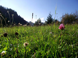 Mountain Meadow by DanaVarahi