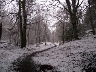 Craig Phadrig forest in winter by DanaVarahi