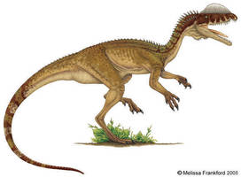 Dilophosaurus by mmfrankford