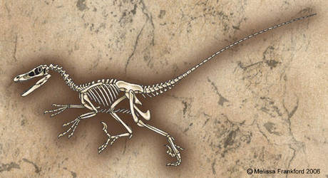 Velociraptor Skeleton by mmfrankford