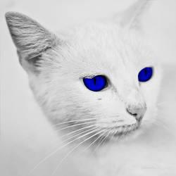 the beauty in blue by dorkonx