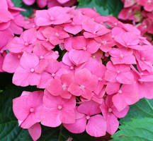 Pink Petals by Doll-Ladi