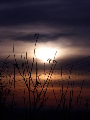 Sun rising by NightyMarey