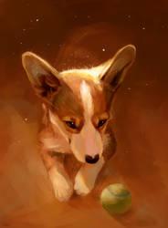 corgi puppy by AlaxendrA