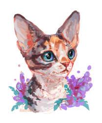kitten of breed kornish-reks by AlaxendrA