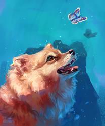 Pomeranian (dog) by AlaxendrA