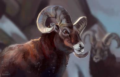 Bighorn sheep by AlaxendrA