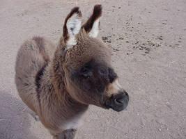 Baby Donkey by breemead