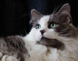 Cat Eyes by Tazmaa