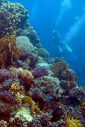 My underwater gardens by VirtualWords