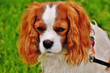 Doggie Dog! by Dog-Lovers--Club