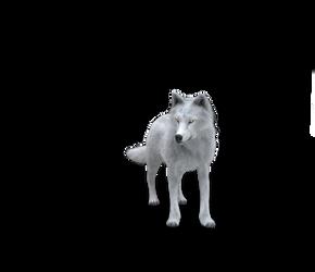 Free Wolf Stock by TwiztedMetal3D