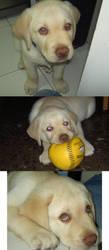 Puppy Otto by Biruchi