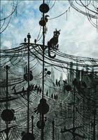 A kittycat's Web by MinnaSundberg