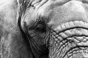 Elephant by maddog1138