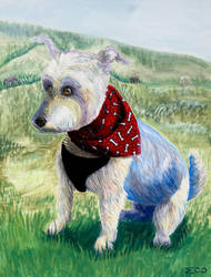 Westie Mix: Commission by MenollySagittaria