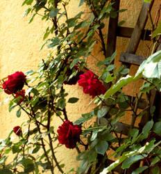 In this garden of mine I by desdemonea