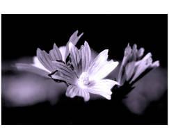Bloom by DarknessWonder