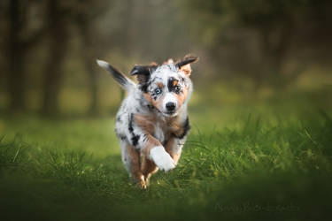 Spring puppy by Huskana
