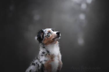 Pup by Huskana