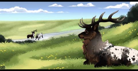 Wishing Meadows - Exploration [Rukaan] by JollyMutt