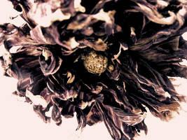 dead.flower by ZeBiii