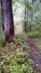 Trail #2 by AlisterThatchel