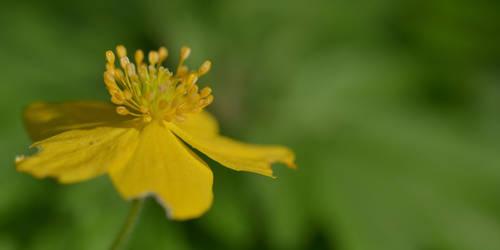 Golden flower by tree3