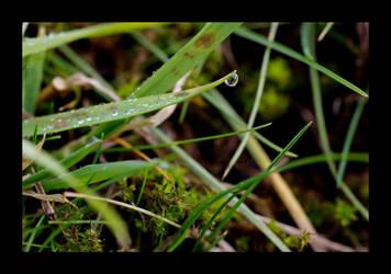 Spring fever by heidinanookie