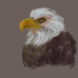 Eagle by adenas599