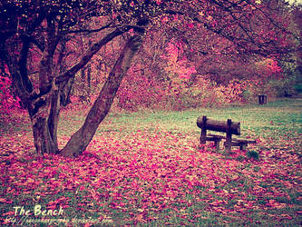 lonely bench. by xxecchangraphy
