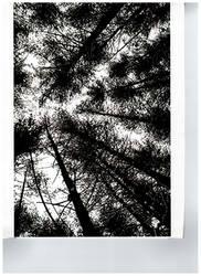 Trees by 99GummyBears