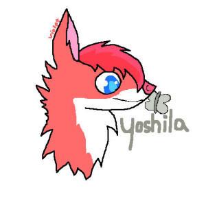 Yoshila's Profile Picture