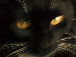 Catlike Reflexes by otakugir