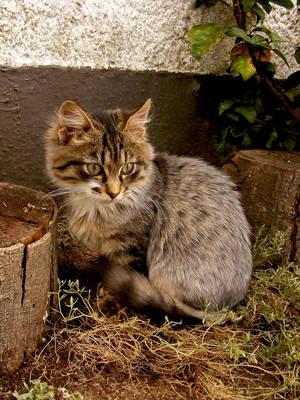 Autumn feline by MajorasMasks