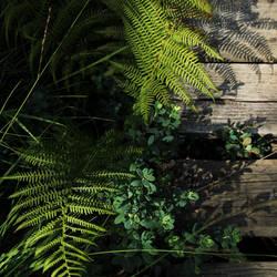 Jardin secret by DiaouL