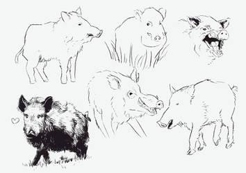 Boars by Tysirr