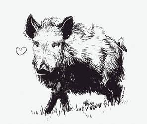 Love boar by Tysirr