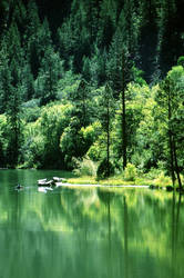 river runs through with green by kovboj