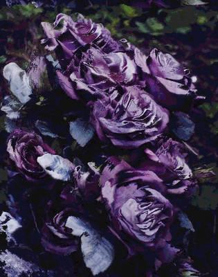 purple roses  of friendship by analovecatdog