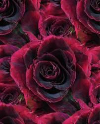 roses of friendship happy birthday by analovecatdog