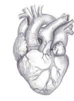 Human Heart by Mutantenmaid