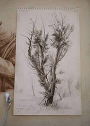 Tree Study by D0RIAN0