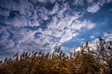Reed and Blue Sky by kereszteslp